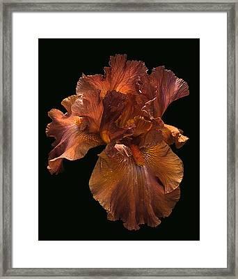 Iris Framed Print by Viktor Savchenko