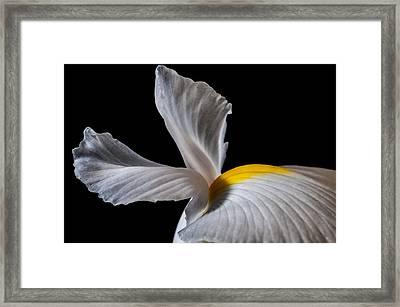 Iris Wings Framed Print by Art Barker