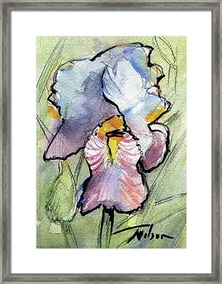Iris With Impact Framed Print by Ron Wilson