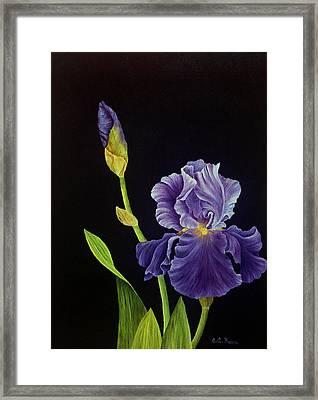 Iris With Purple Ruffles Framed Print