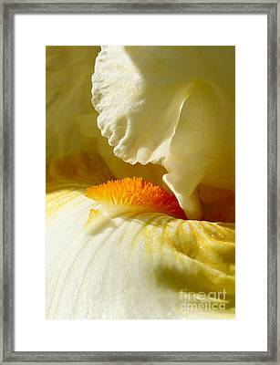 Iris With Touch Of Orange Framed Print