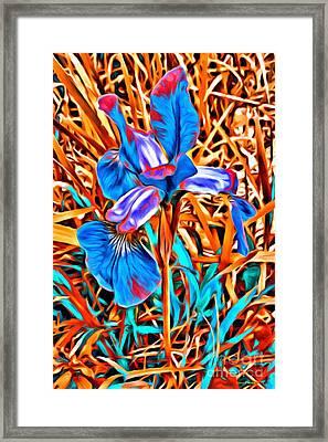 Iris Wow Framed Print