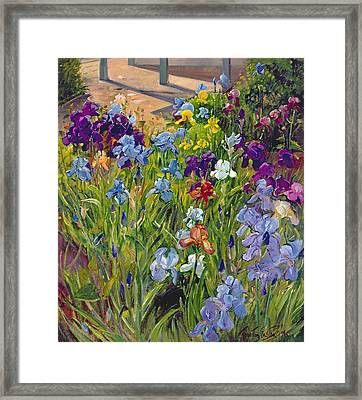 Irises And Summer House Shadows Framed Print