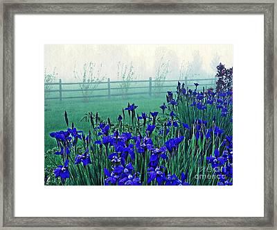 Irises At Dawn 3 Framed Print by Sarah Loft
