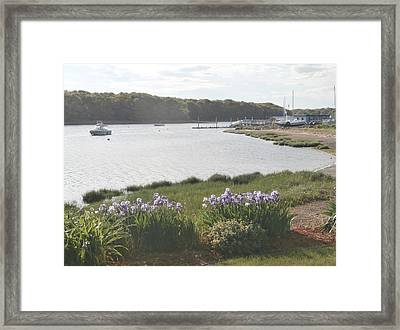 Irises By The Bay Framed Print
