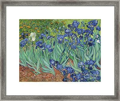 Irises By Vincent Van Gogh Framed Print by Esoterica Art Agency