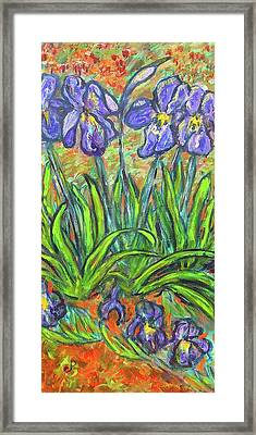 Irises In A Sunny Garden Framed Print by Carolyn Donnell