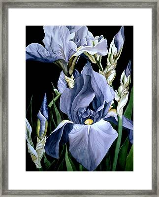 Irises In Blue Framed Print