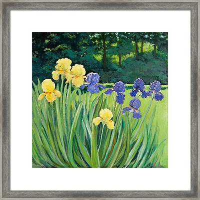 Irises In The Garden Framed Print by Betty McGlamery