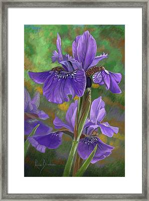 Irises Framed Print by Lucie Bilodeau