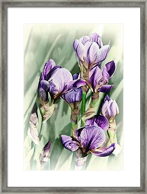 Irises Framed Print by Marcia Colelli