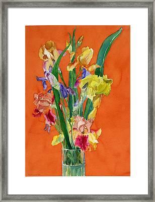 Irises Framed Print by Martha Zausmer paul
