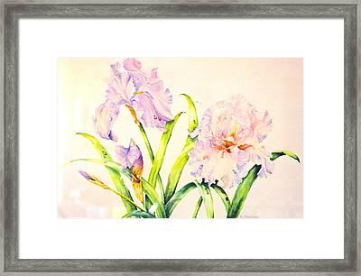 Irises Framed Print by Nancy Newman