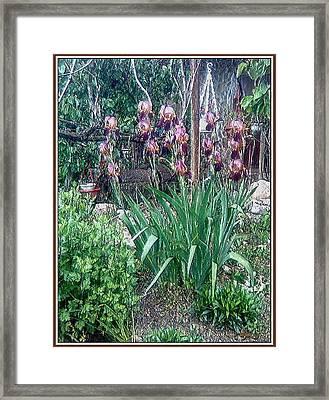 Framed Print featuring the digital art Irises by Pemaro
