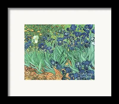 Plant Framed Prints