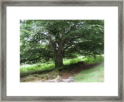 Framed Print featuring the photograph Irish Elder by Rebecca Wood