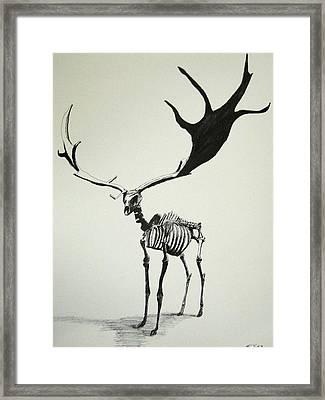 Irish Elk Skeleton Framed Print