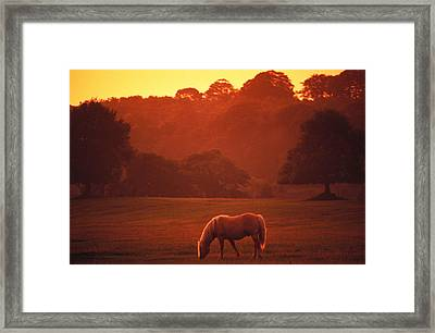 Irish Horse In Gloaming Framed Print by Carl Purcell