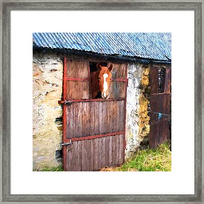 Irish Mare Framed Print by Gary Guthrie