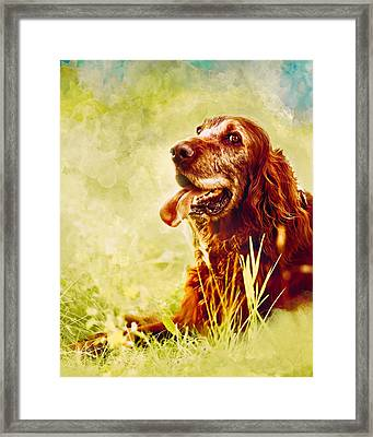 Irish Setter Dog Framed Print by Debi Bishop