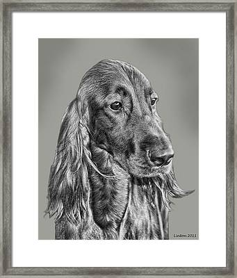 Irish Setter Portrait Framed Print by Larry Linton