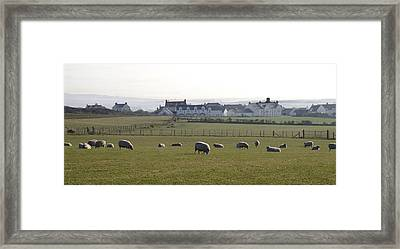 Irish Sheep Farm Framed Print by Henri Irizarri