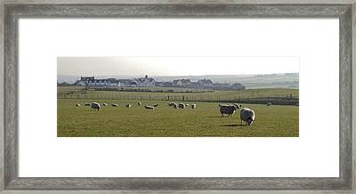 Irish Sheep Farm I Framed Print