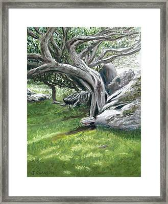 Irish Tree Ring Of Kerry Framed Print by Joan Swanson