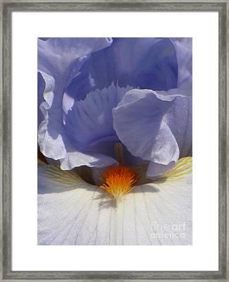 Iris's Iris Framed Print