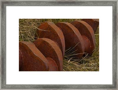 Iron Vertibrae Framed Print by Jennifer Apffel