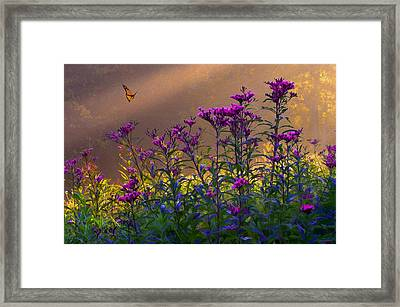 Ironweed Framed Print by Ron Jones
