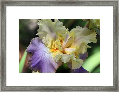 Irresistible Iris Framed Print by Donna Kennedy