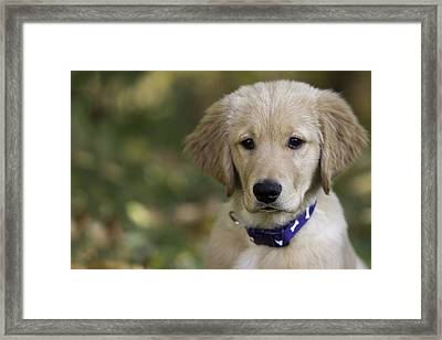 Irresistible Framed Print