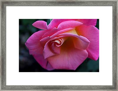 Framed Print featuring the photograph Irresistible by Michiale Schneider