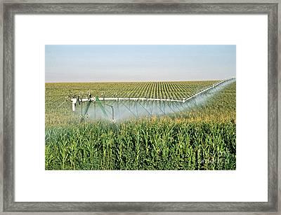 Irrigated Corn Crop Framed Print
