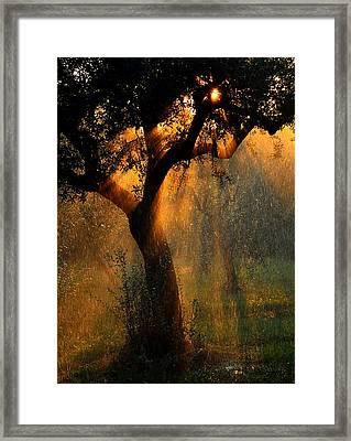 Irrigation Framed Print by Stefano Castoldi