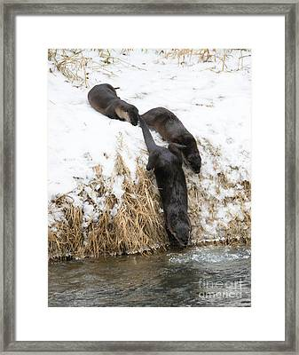 Is It Cold Framed Print
