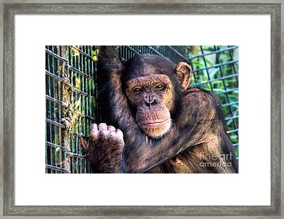 Is It Friday Yet? Framed Print