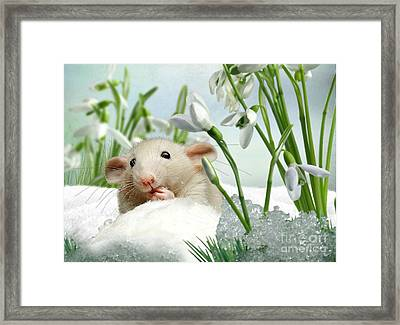 Is It Spring Yet ? Framed Print