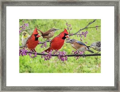 Framed Print featuring the photograph Is It Spring Yet? by Bonnie Barry