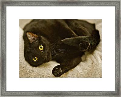 Is It Time For A Belly Rub Framed Print by Robert Joseph