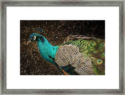 Is She Looking ? Framed Print by Jean Noren