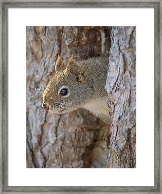 Is Someone There? Framed Print