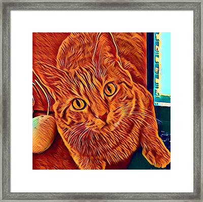 Is There A Mouse In The House? Framed Print