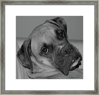 Is This Necessary Framed Print by DigiArt Diaries by Vicky B Fuller