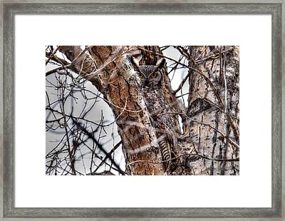 Is This Tree Looking At Me? Framed Print by Michael Morse