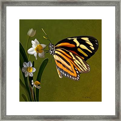 Isabella Tiger Butterfly Framed Print