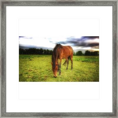 Isabellashores.com #horse #equine Framed Print