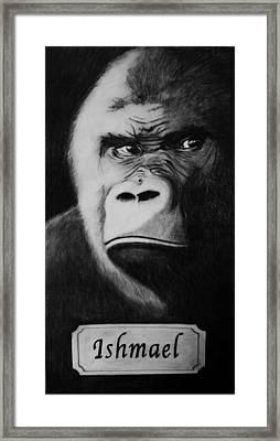 Ishmael Framed Print by Elizabeth Comay