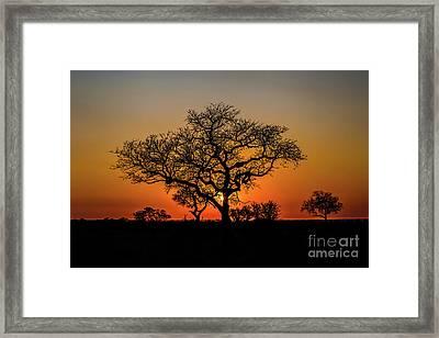 Isimangaliso Wetland Park Framed Print